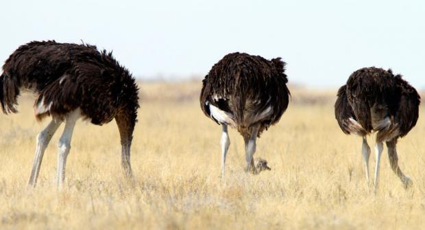 Эффект страуса — как неприятные новости заставляют принимать плохие решения